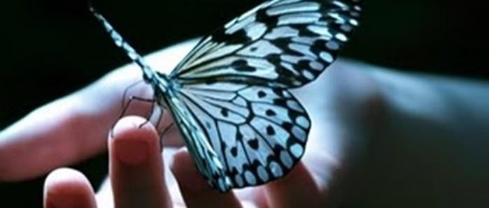 la leyenda de la mariposa